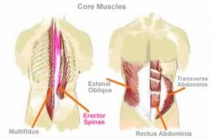 Erector Spinae Diagram